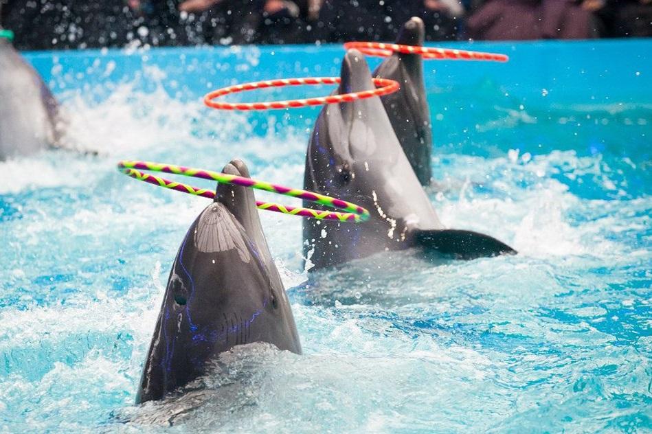 Билет на шоу с дельфинами